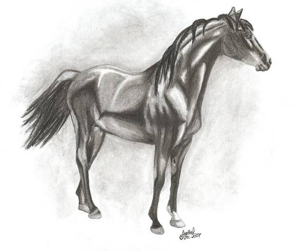 Zimmy Portrait Horse Poster featuring the drawing Zimmy by Crystal Suppes