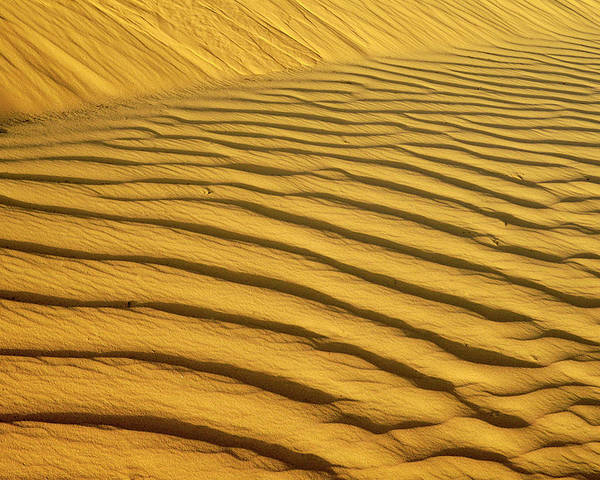 Sand Dune Poster featuring the photograph Sand Dune, Negev Desert, Israel by Photostock-israel