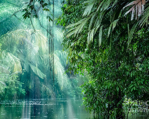 Forest Poster featuring the photograph Tortuguero National Park, Rainforest by Ronnybas Frimages