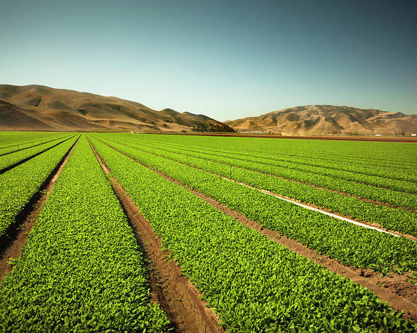 Environmental Conservation Poster featuring the photograph Crops Grow On Fertile Farm Land by Pgiam