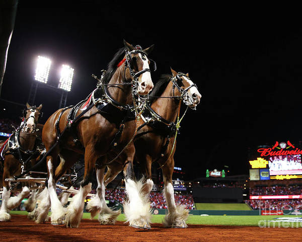 Horse Poster featuring the photograph World Series - Boston Red Sox V St by Ronald Martinez