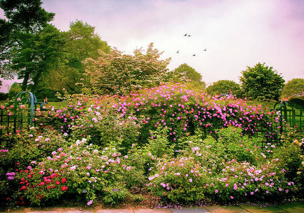 New York Botanical Garden Poster featuring the photograph Rose Garden Greeting by Jessica Jenney