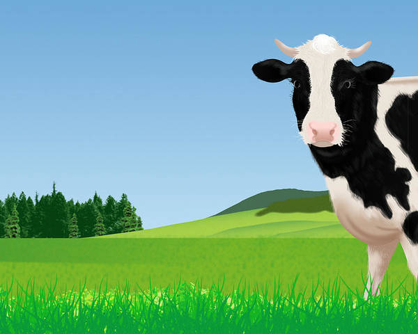 A Cow In The Field Illustration Poster By Imagewerks