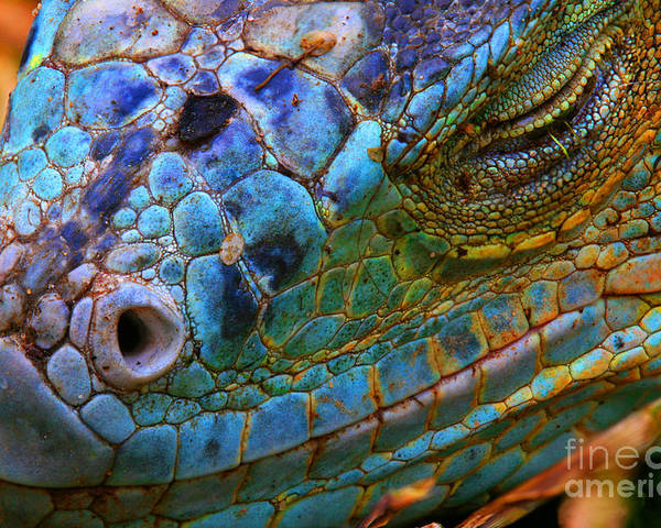 Dragon Poster featuring the photograph Amazing Iguana Specimen Displaying A by Tessarthetegu