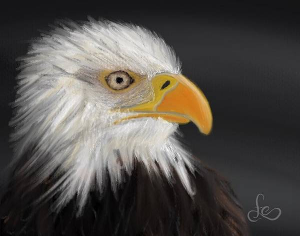 Bald Eagle Poster featuring the pastel Bald Eagle by Fe Jones