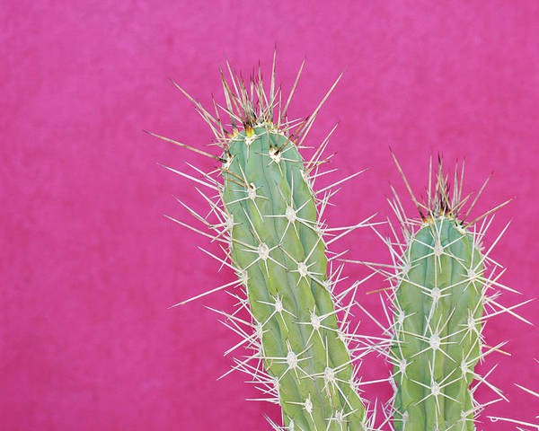California Poster featuring the photograph Cactus Against A Bright Pink Wall by Tracy A. Flaming