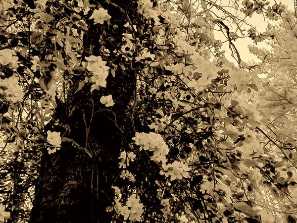 Tree Poster featuring the photograph Celebrating A Life by Elizabeth Tillar
