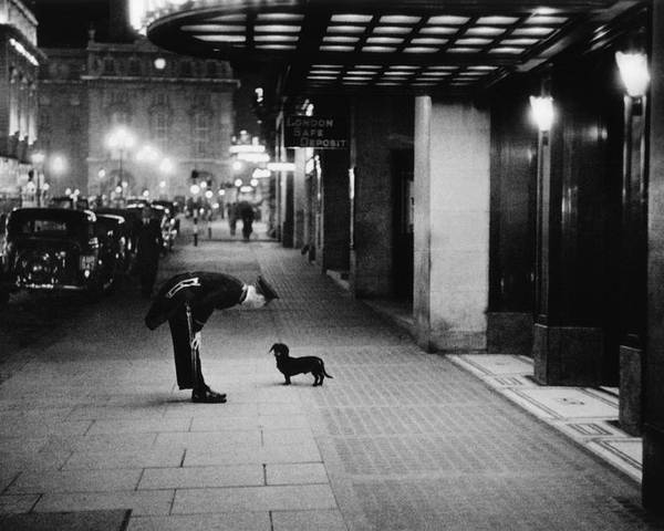 Piccadilly Circus Poster featuring the photograph Commissionaires Dog by Kurt Hutton