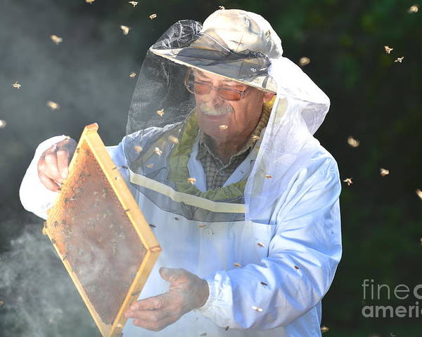 Bee Poster featuring the photograph Experienced Senior Beekeeper Making by Darios