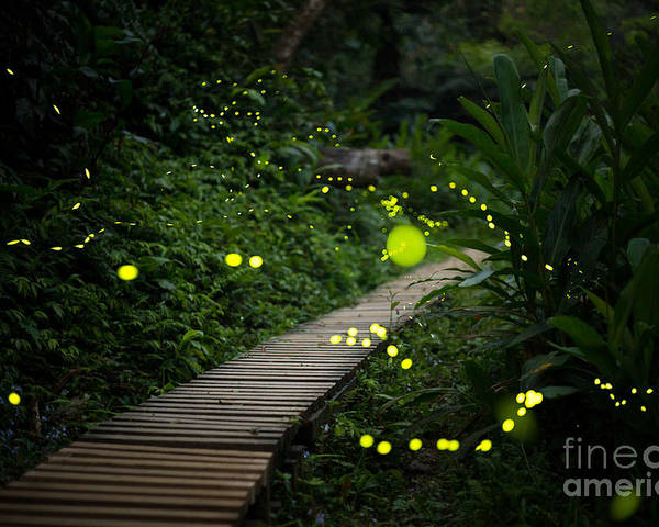 Country Poster featuring the photograph Fireflies In The Bush At Night In Taiwan by Richie Chan