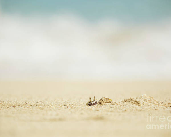 Hawaii Poster featuring the photograph Ghost Crab Emerging From Hole In Sand by Charmian Vistaunet