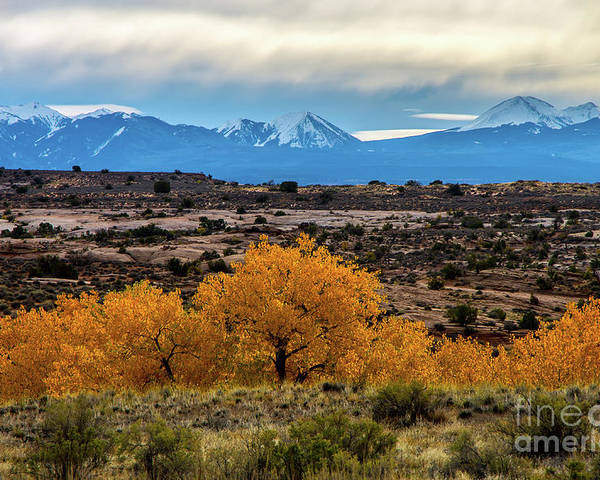Cottonwoods Poster featuring the photograph Golden Cottonwoods by Stephen Whalen