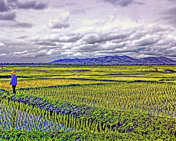Rice Poster featuring the photograph Heartland by Steve Harrington