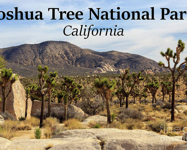 Joshua Tree National Park Valley Poster featuring the photograph Joshua Tree National Park Valley, California by G Matthew Laughton