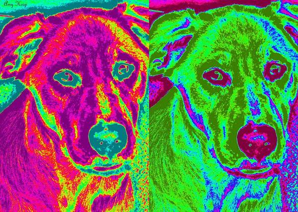 Liberty The Dog Pop Art by Amy Hosp