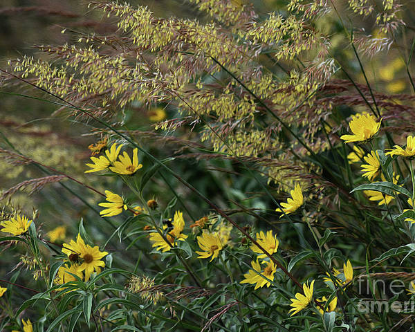 Pictures Of Flowers Poster featuring the photograph Painted Fall Flowers by Skip Willits