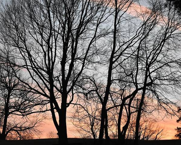Trees Poster featuring the photograph Pink Sky by Cassidy Marshall