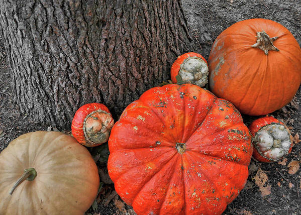 Pumpkin Poster featuring the photograph Red Orange by JAMART Photography