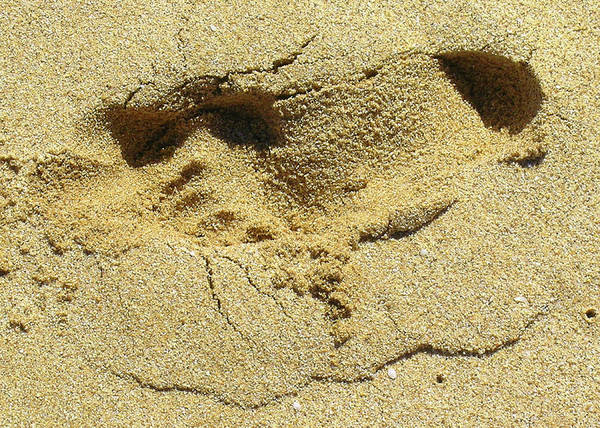 Quotes Greeting Cards Poster featuring the photograph Sand Between Your Toes by James Temple