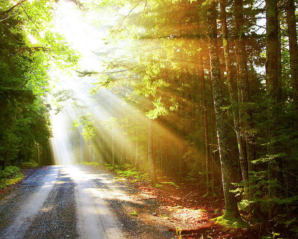 Outdoors Poster featuring the photograph Sunflare On Road by Thomas Northcut