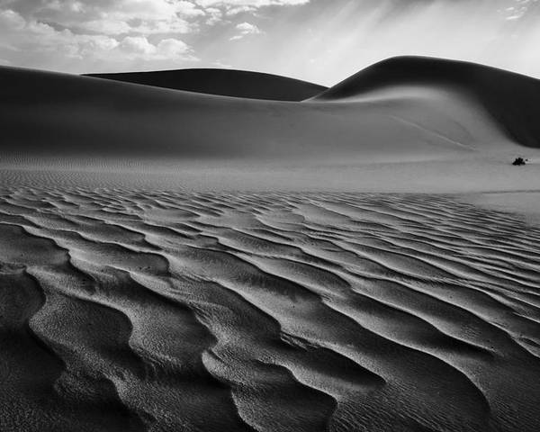 Namibia Poster featuring the photograph The Living Dunes, Namibia I by Neville Jones