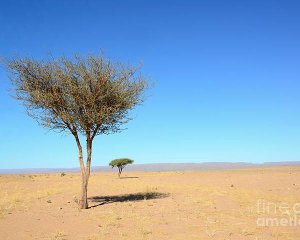 Rural Poster featuring the photograph Tree In Sahara Desert In Morocco Near by Procyk Radek