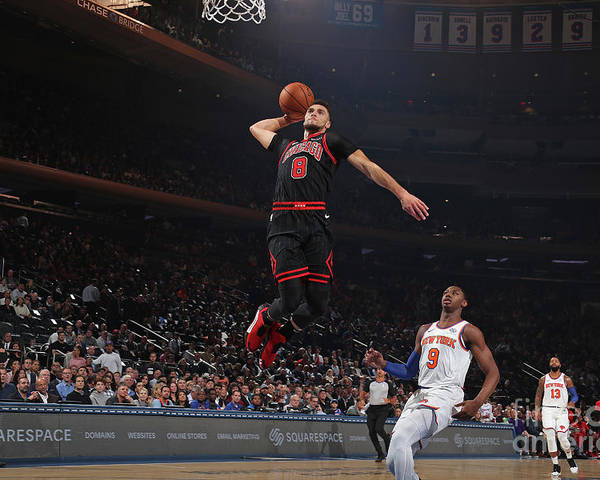 Chicago Bulls Poster featuring the photograph Zach Lavine by Nathaniel S. Butler