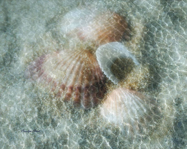 Shells Poster featuring the photograph Step Lightly by Carolyn Staut