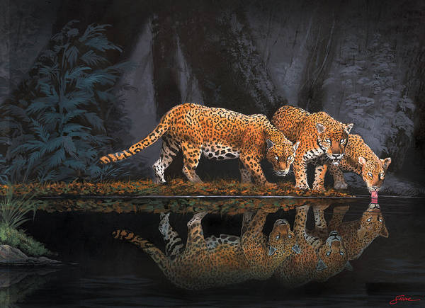 #leopards Poster featuring the painting A Cool Drink by Harold Shull