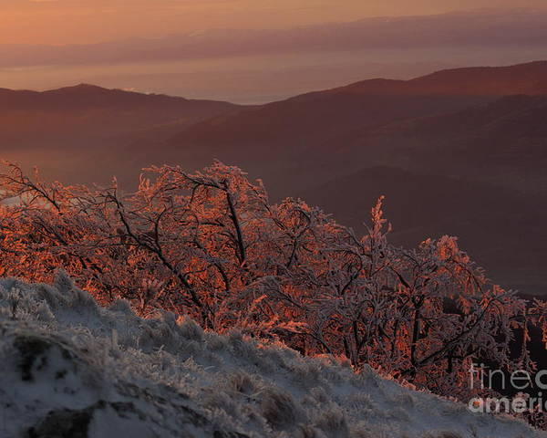 Winter Poster featuring the photograph An winter landscape in the morning by Amalia Suruceanu