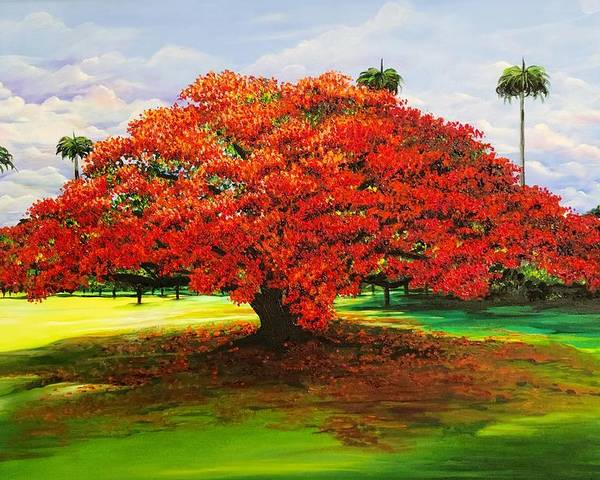 Flamboyant Tree Poster featuring the painting Flamboyant Ablaze by Karin Dawn Kelshall- Best