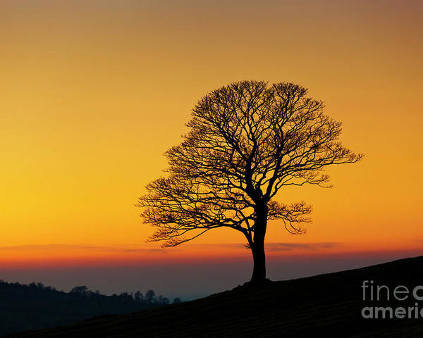 One Poster featuring the photograph Lone Winter Tree At Sunset by Neale And Judith Clark