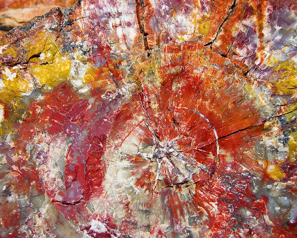 Petrified Wood Stone Texture Abstract Color Skip Hunt Poster featuring the photograph Painted Desert Wood 1 by Skip Hunt