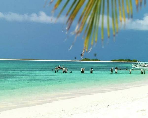 Poster featuring the photograph Palm Beach Los Roques Venezuela by Organizacion Bluewater