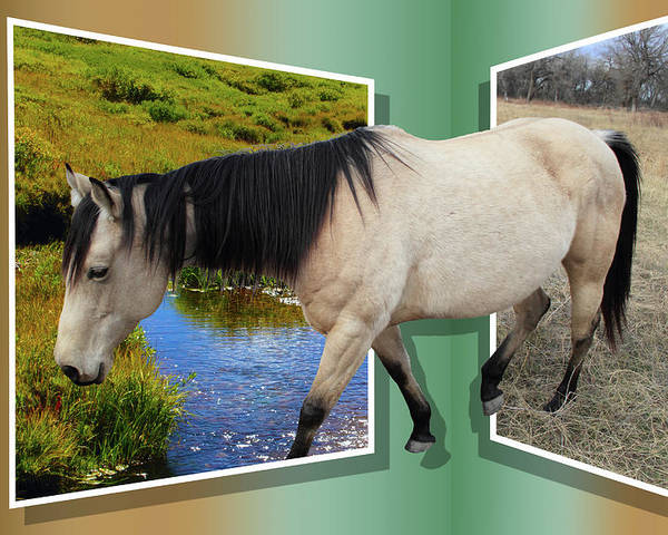 Horse Poster featuring the photograph The Grass Is Always Greener On The Other Side by Shane Bechler