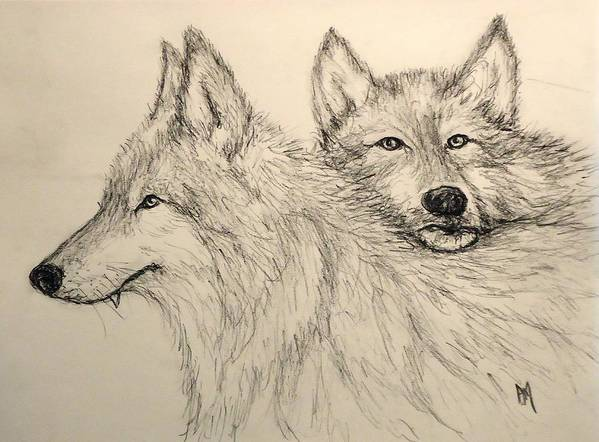 Wolves Poster featuring the drawing Timberwolf by Pete Maier