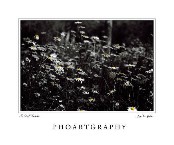 Flowers Poster featuring the photograph Field Of Daisies by Ayesha Lakes
