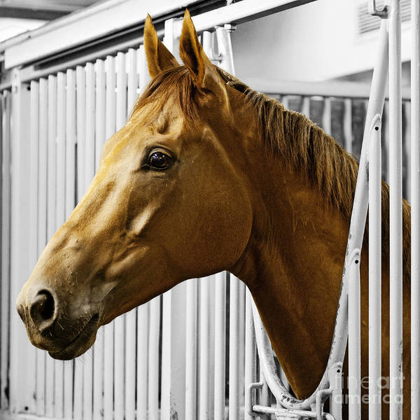 Horse Head Poster featuring the photograph Horse Head by Gail Turner