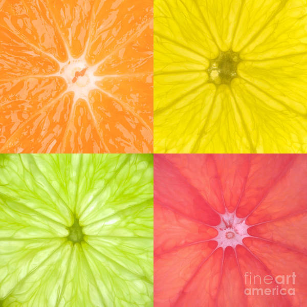Citrus Poster featuring the photograph Citrus Fruits by Richard Thomas