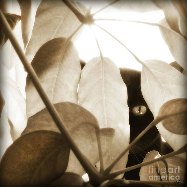 Cat Poster featuring the photograph Eye Spy by Shevon Johnson