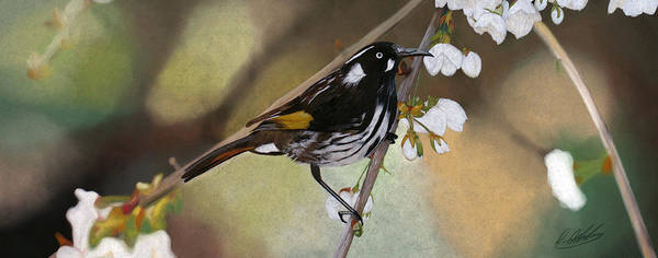 Newholland Honey Eater Poster featuring the drawing Newholland Honey Eater by David Alldridge