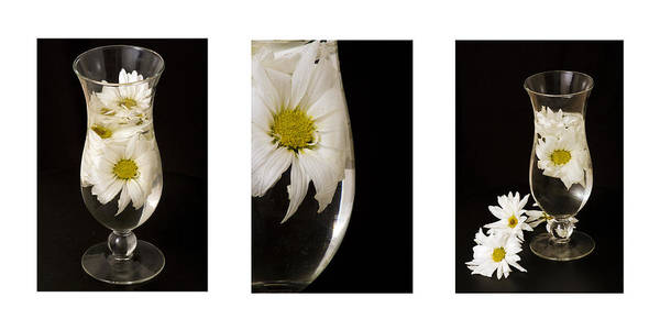 Flowers Poster featuring the photograph Daisy Triptych by Ayesha Lakes
