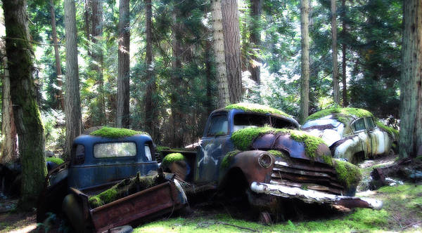 Vintage Cars Poster featuring the photograph Car Lot In The Forest by Diane Smith