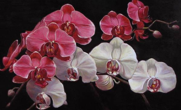 Orchid Still Lfe Painting Poster featuring the painting Orchids by Takayuki Harada