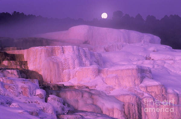 North America Poster featuring the photograph Full Moon Sets Over Minerva Springs On A Winter Morning Yellowstone National Park by Dave Welling