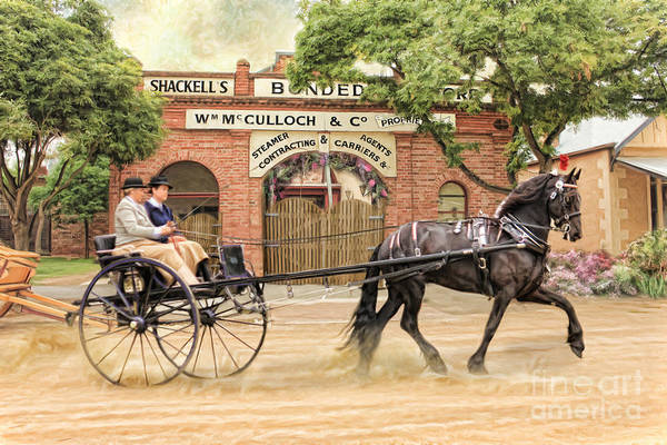Friesian Horse Poster featuring the photograph Friesian Folly by Trudi Simmonds