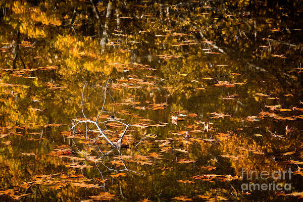 Autumn Poster featuring the photograph Leaves And Reflections by Susan Cole Kelly
