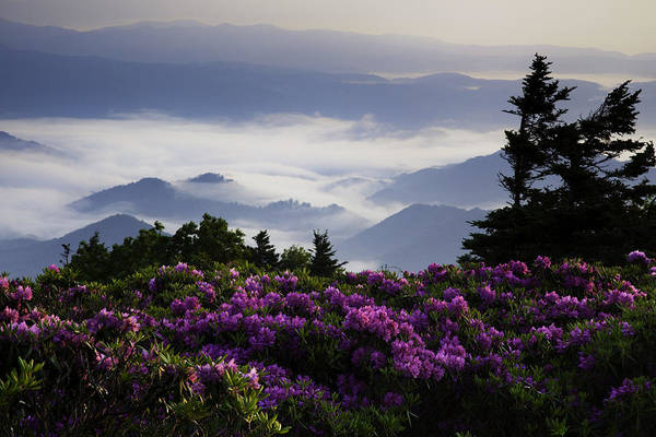 Roan Mountain Poster featuring the photograph Morning On Grassy Ridge Bald by Rob Travis