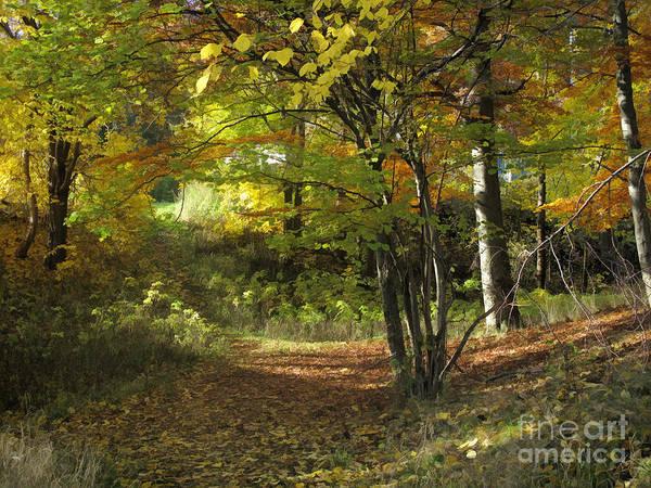 Baar Poster featuring the photograph Autumn Feeling by Lutz Baar