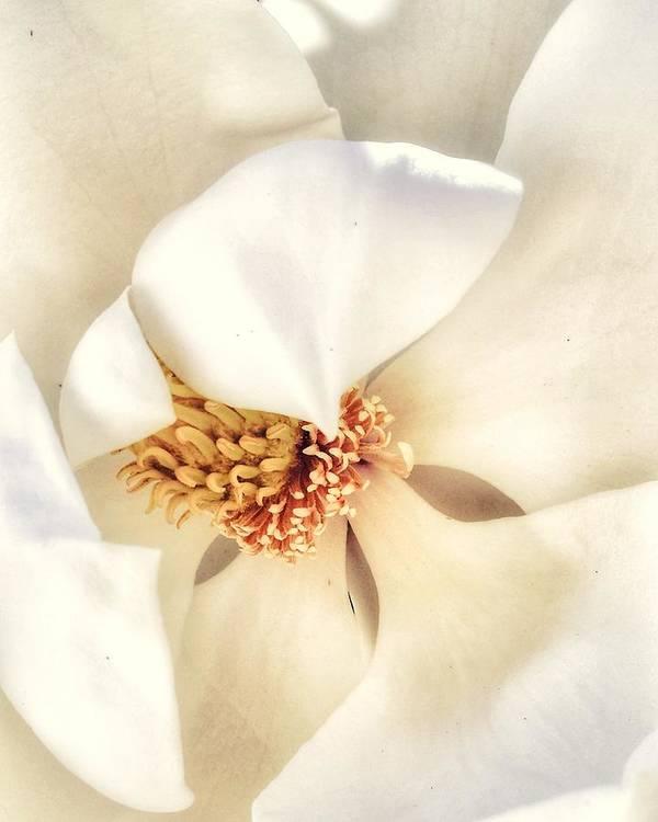 Magnolia by Chastity Wofford